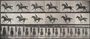 Eadweard Muybridge, Bouquet with rider, ca. 1887; Collotype