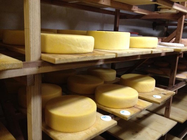 "Friday's farm tours include a visit to Weirauch Farm & Creamery, owned by Joel and Carleen Weirauch, (""why-rock"") who produce a variety of humane, organic, farmstead sheep cheeses and organic cow cheeses in the plush hills of Petaluma.  Pictured here: Tomme Fraiche and Carabiner cow's milk cheeses."