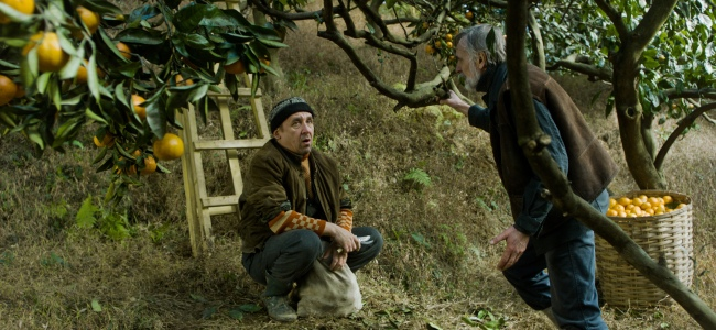 """A scene from Zaza Urushadze's """"Tangerines"""" (2013) which is set in 1992 in war torn Abkhazia, a hand's throw from Soochi.  The film addresses long-standing ethnic conflicts that were stirred with the dissolution of the Soviet Union.  An old Estonian man, who is helping his elderly neighbor harvest his annual tangerine crop, ends up caring for two wounded men who are blood enemies.  Shot in the mountainous western Georgia region of Guria, the film features gorgeous cinematography.  Photo: courtesy San Francisco Film Society"""