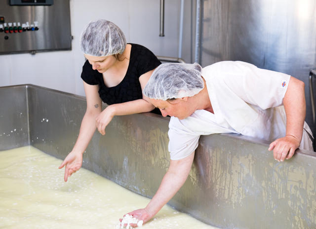 """Local farm tours are the highlight of the annual California Artisan Cheese Festival, March 20-22, 2015.  Jim and Donna Pacheco's Achadinha (Osh-a-deen-a) Cheese Company, on Chileno Valley Road, is a tour participant.  Achadinha carries on a family tradition that began in the 1950's when Jim's Portuguese parents founded their dairy farm near Bodega Bay.  Achadinha struck gold with its delectable and award-winning """"Capricious"""" aged goat cheese.  Their """"California Crazy Curd,"""" fresh cow and goat's milk curds, are trending big time.   Image: courtesy Achadinha Cheese Company"""