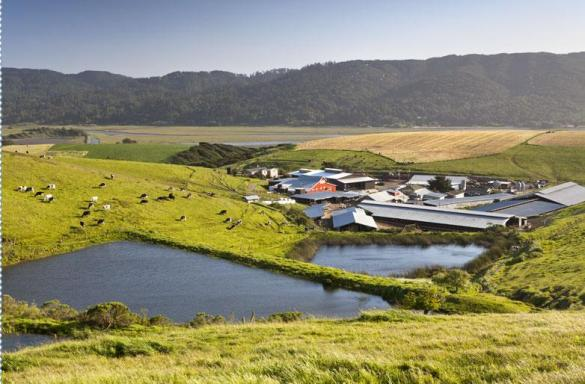 Situated on the pastoral Giacomini Family Dairy, just north of Point Reyes Station, is the Point Reyes Farmstead Cheese Company, a participant in the festival's farm tours.   When the early morning fog rolls in from the Pacific, it lightly salts their sleeping pasture.  This lush certified-Organic grass accounts for the majority of their cows' diet and the wonderful flavor of their award winning cheeses such as Toma, Bay Blue, Point Reyes Blue and their hand-pulled mozzarella.  This year, farm tour participants can have lunch at The Fork, the dairy's gorgeous educational and entertainment center.   Photo:  Point Reyes Farmstead Company