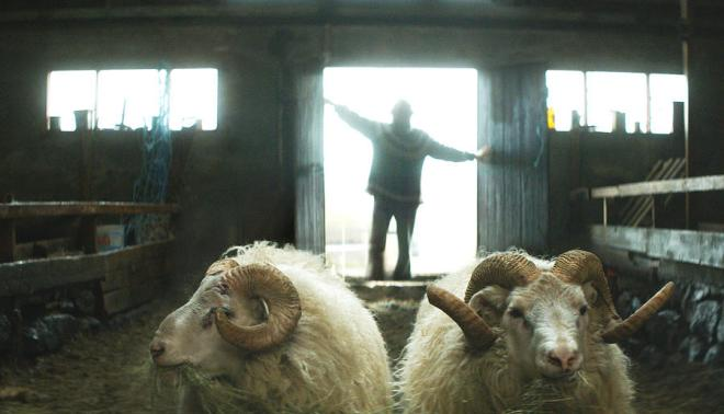 """Icelandic director, Grímur Hákonarson's """"Rams,"""" Winner of the Uncertain Regard Prize at Cannes will screen twice at the 38th Mill Valley Film Festival, October 8-18, 2015. Shot in remote lush valleys of Iceland, it weaves the story of two brothers, both single and getting on in years, who compete fiercely each year for valley-wide recognition for having the best ram. They haven't spoken in 40 years but are forced to come together in order to save what's dearest to their hearts—their sheep. Photo: Courtesy MVFF"""